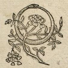 AneauOuroboros1552