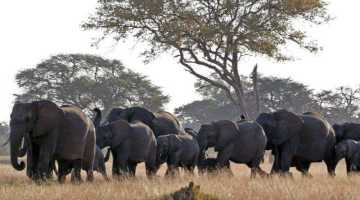 Elephant herd in Hwange National Park