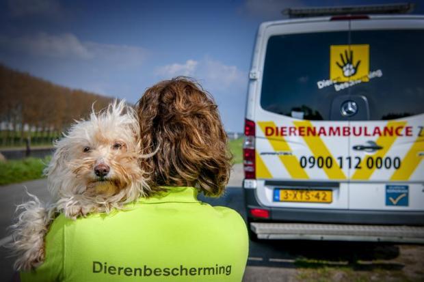 Dierenbescherming_sfeerfoto1.jpg