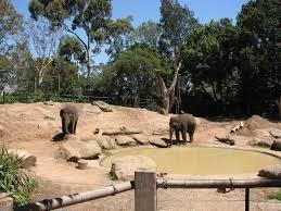 melbourne-elephants