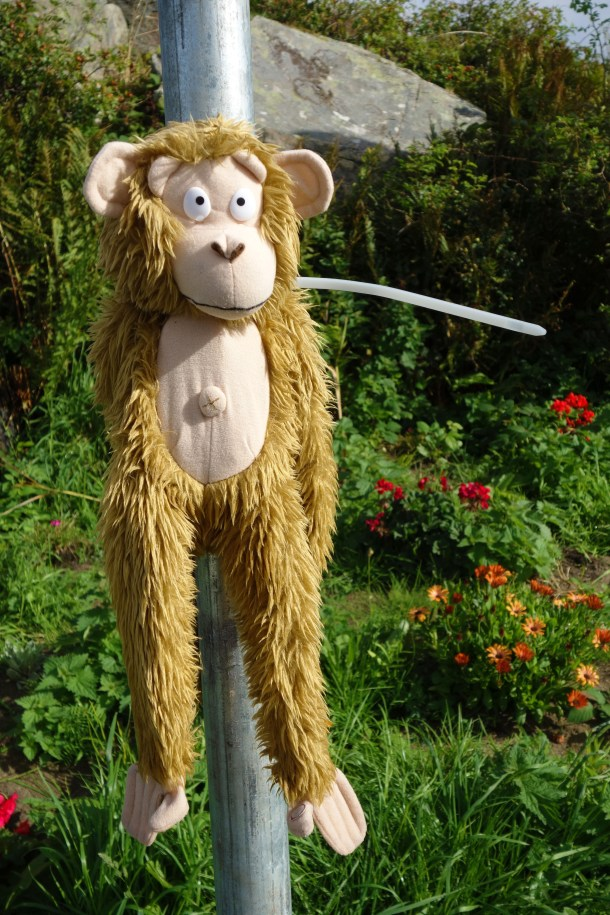 Many poles in County Donegal had stuffed animals attached to them.