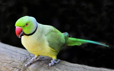 What can we do to keep our pet birds happy?