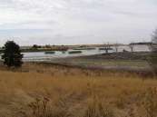 A wetland near Clunes