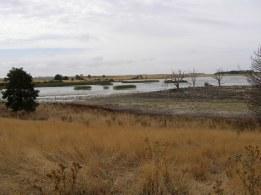 A wetland near Clunes