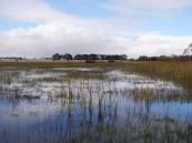 Mullawallah Swamp near Ballarat