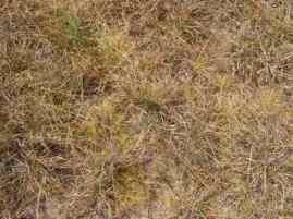 a drying grassland