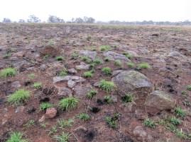 grassland burn at Parwan