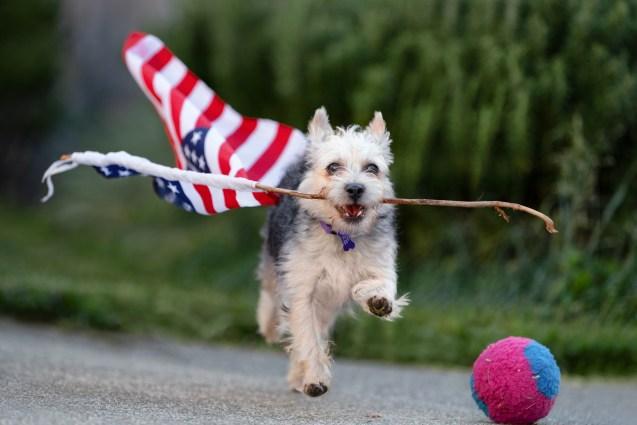 Dog Happy Fourth of July