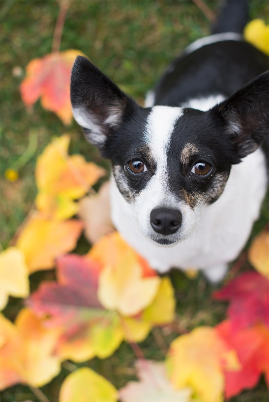 Pet Photography Sonoma County