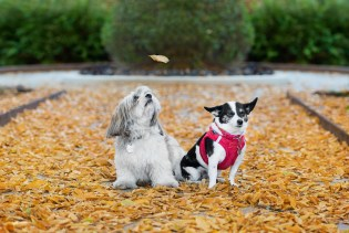 Pet Photography Sonoma, Napa and Marin Counties
