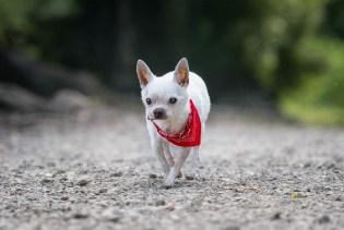 Sonoma Pet Photography