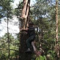 Max klimt hoog in de boom