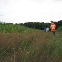 Door het maisveld van de boer