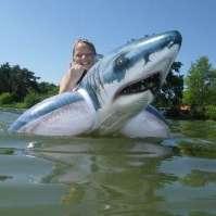 Jay op een gevaarlijke haai