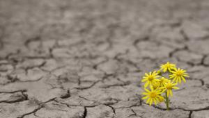 Estrés, resiliencia y nuestra salud