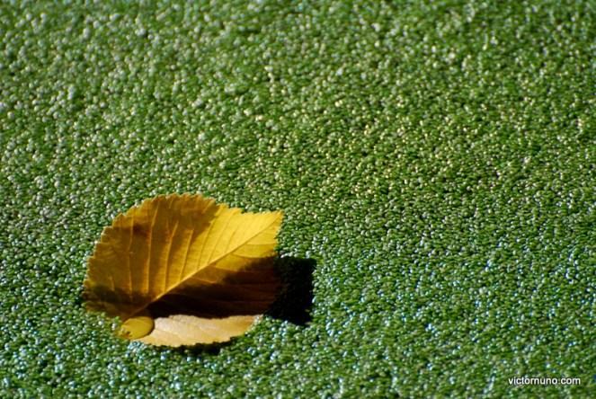 autumn-2011-22