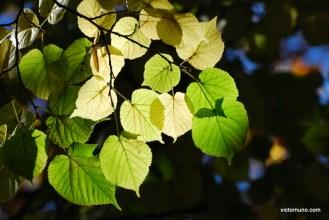 autumn-2011-29