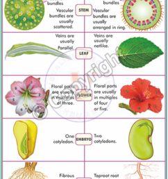 b 91 monocot dicot plants english final cc [ 900 x 1320 Pixel ]