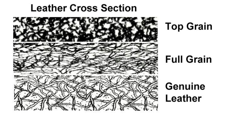 leather 101 - leather cross section
