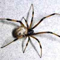 The Dangerous Spider In My Bed - A True Story