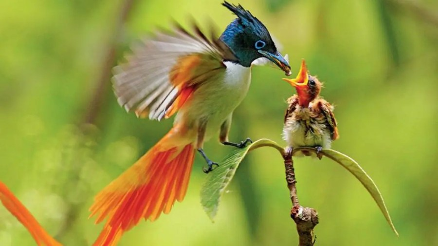 تعرف على 9 حقائق مثيرة عن الطيور