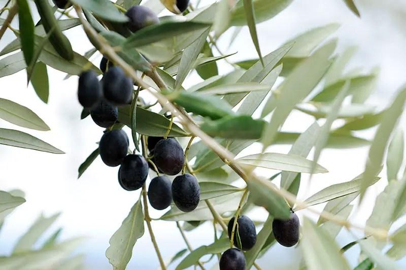 فوائد مذهلة لعلاج البنكرياس والسر في 6 أعشاب