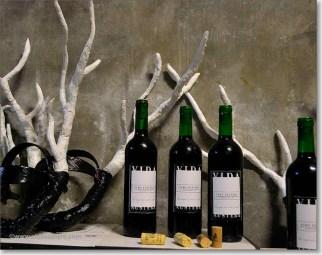 Vida Austera Wine Fashion Show