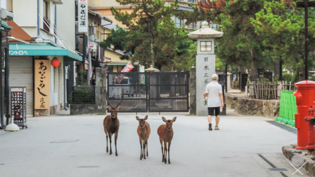 Hiroshima Miyajima Shikas andando