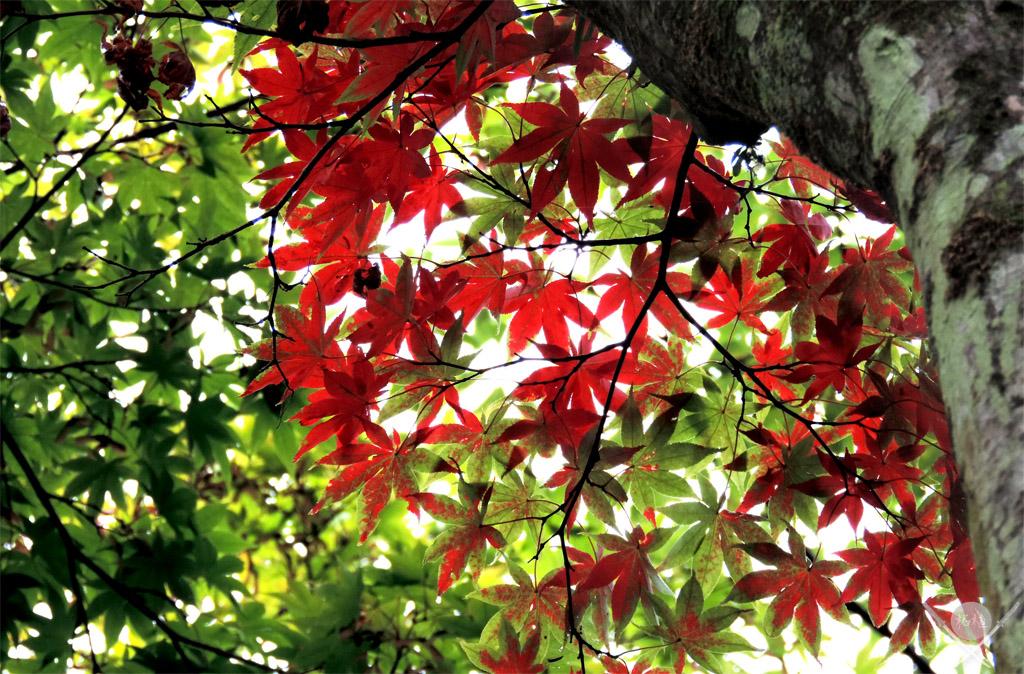 Nikko Shoyoen Garden folhas de outono
