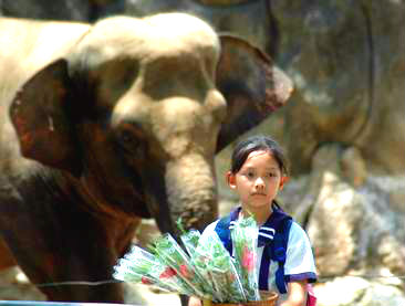 Thailand Ayutthaya Cu va chim se se Vida de Tsuge VDT