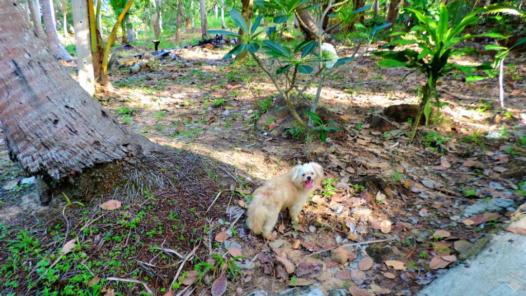 Thailand - Koh Phi Phi - Amiguinho em Phi Phi - Vida de Tsuge - VDT - 1024x576