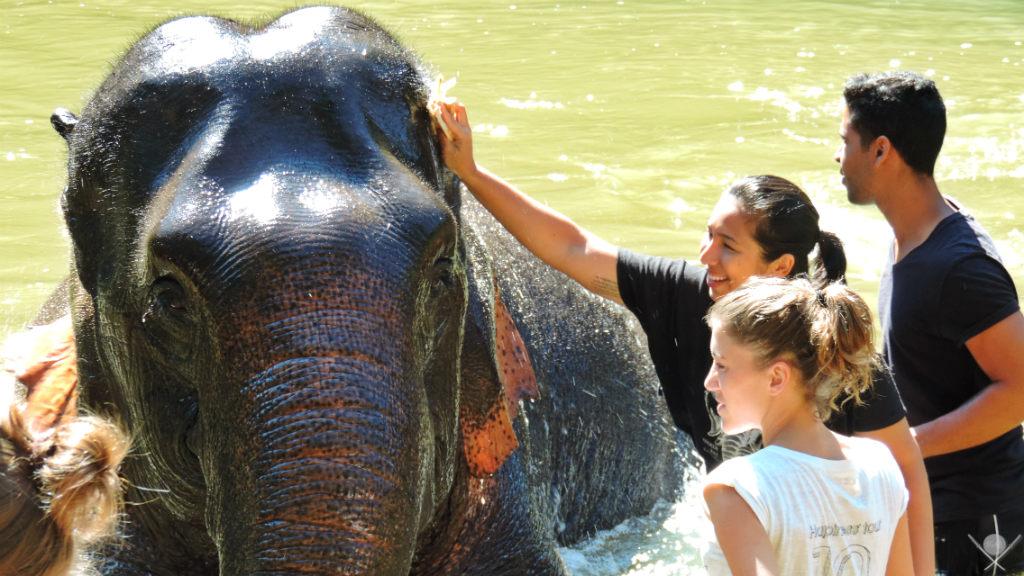 Thailand - Chiang Mai - Banho Elefante - Viagens - Vida de Tsuge - VDT