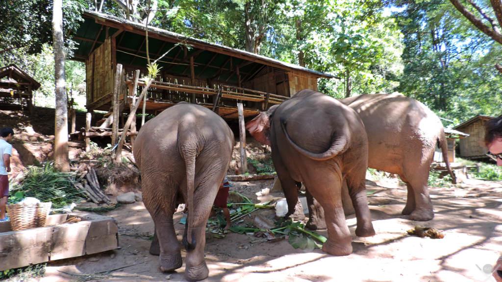 Thailand - Chiang Mai - Elefantes - Viagens - Vida de Tsuge - VDT