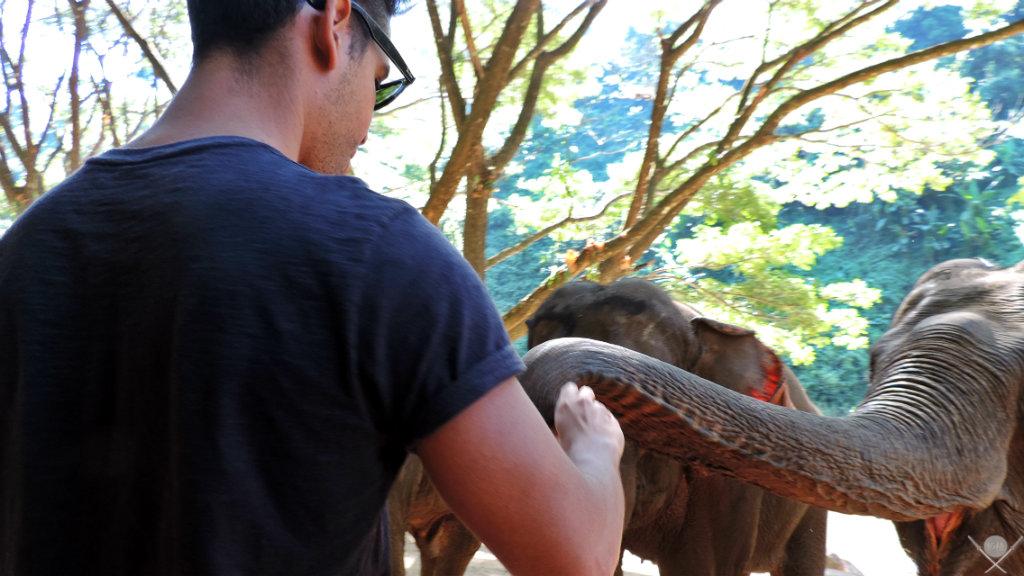 Thailand - Chiang Mai - Elephant Trekking Care 4 - Viagens - Vida de Tsuge - VDT