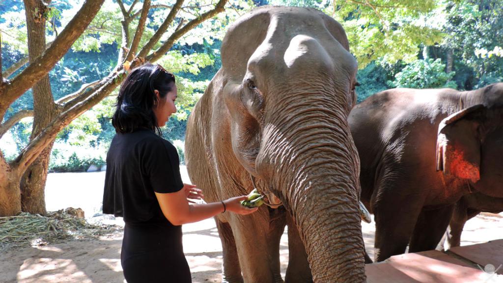 Thailand - Chiang Mai - Elephant Trekking Care 5 - Viagens - Vida de Tsuge - VDT