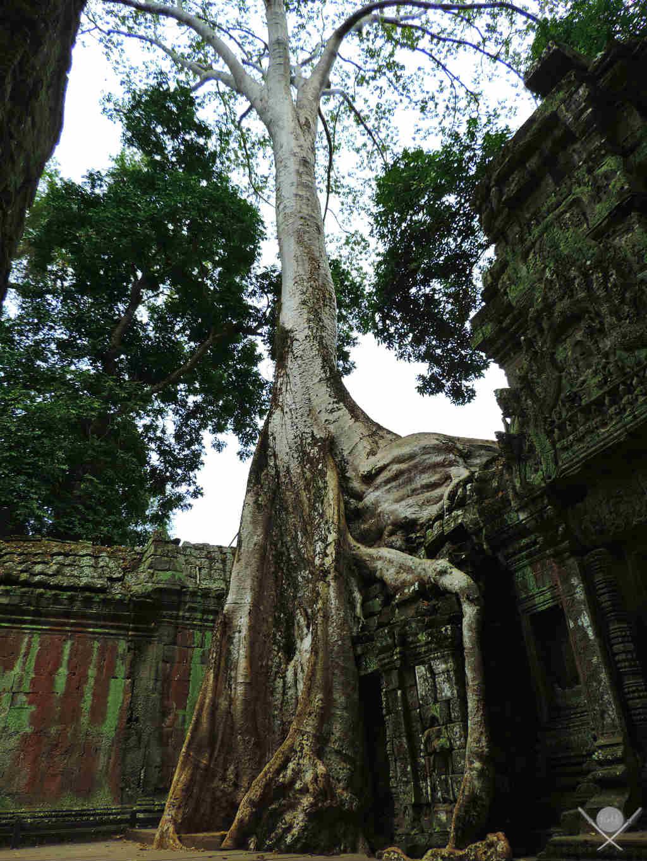 Camboja - Ta Phrom Siem Reap - Viagem - Vida de Tsuge - VDT