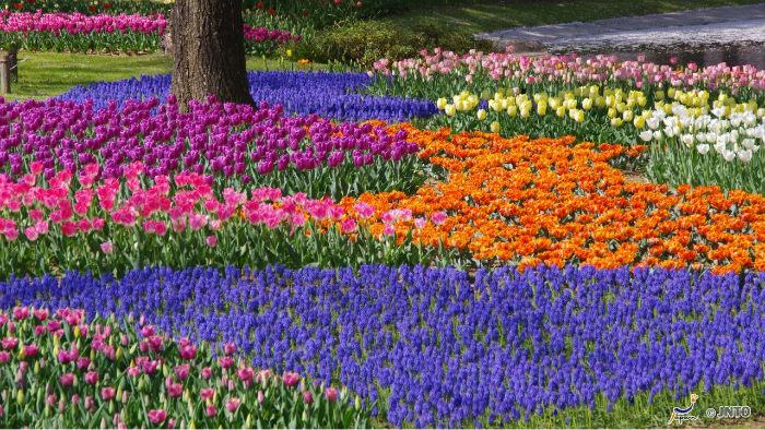 Showa-Kinen-Park-m_163459-jnto_Equinócio-da-Primavera-no-Japão-10-dicas-do-que-fazer-nessa-estação_Viajando-para-o-Japão_Vida-de-Tsuge-VDT