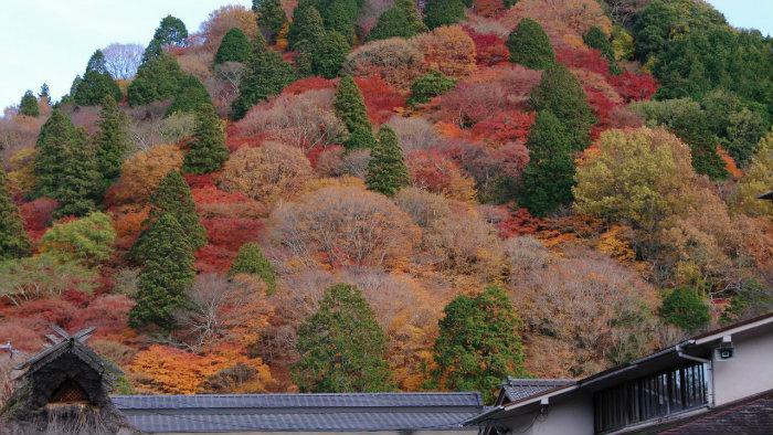 outono-no-japão_5_cultura-japonesa_Vida-de-Tsuge_VDT