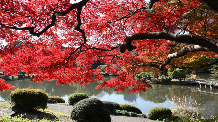 shinjuku_Festivais-outono_Cultura-japonesa_Vida-de-Tsuge_VDT