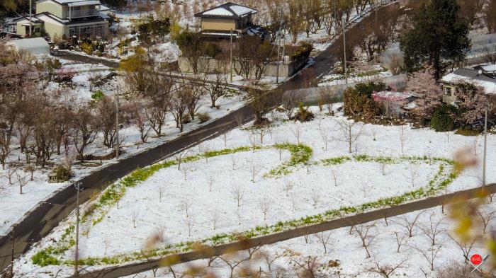 hanamiyama-park-15_explorando-o-japao_vida-de-tsuge_vdt
