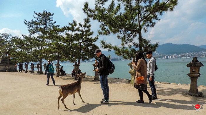 itsukushima-shrine_11_destinos-no-japao_vida-de-tsuge_vdt