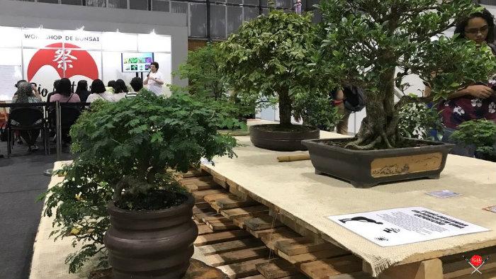 bonsai_rio-matsuri-2020_cultura-japonesa_vida-de-tsuge_vdt