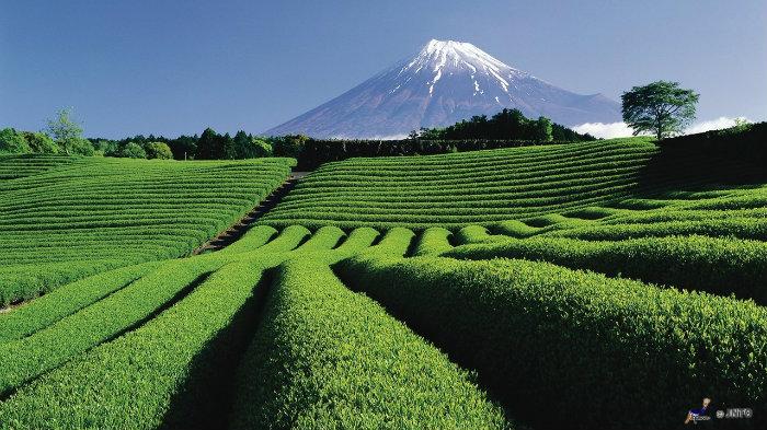 m_104079_monte-fuji_viagem-pro-japao_vida-de-tsuge_vdt