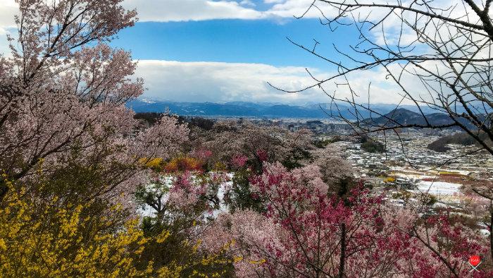 hanamiyama-park_explorando-o-sakura-matsuri_viagem-japao_vida-de-tsuge-vdt