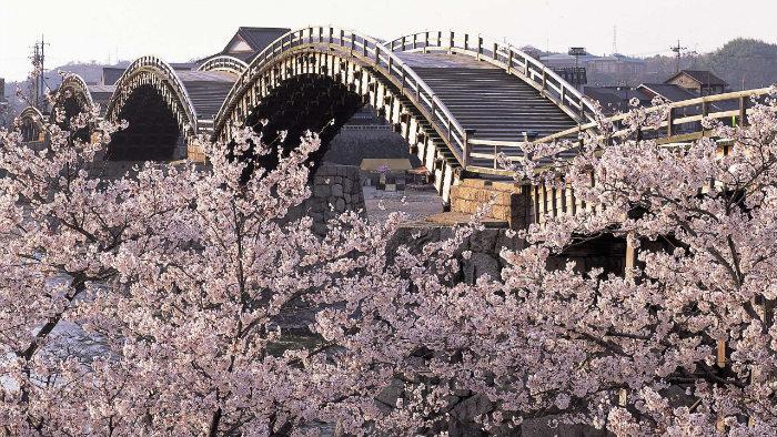 m_183309_explorando-o-sakura-matsuri_viagem-japao_vida-de-tsuge-vdt