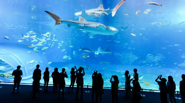 churaumi3_aquarios-no-japao_viagem-pro-japao_vida-de-tsuge_vdt
