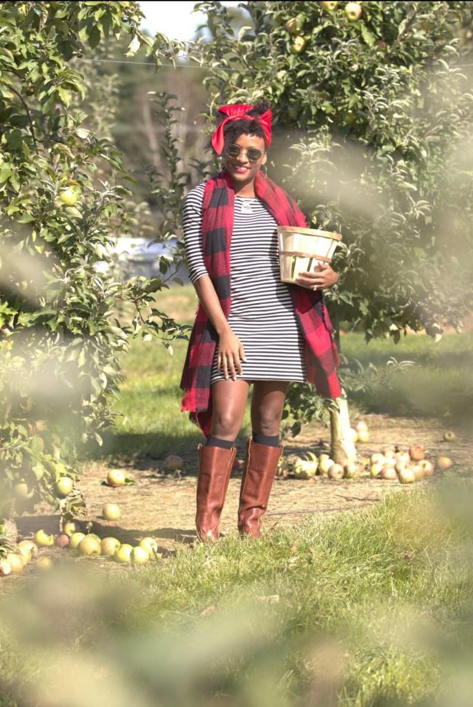 Highland Orchards4
