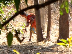 Gathering wood from jungle