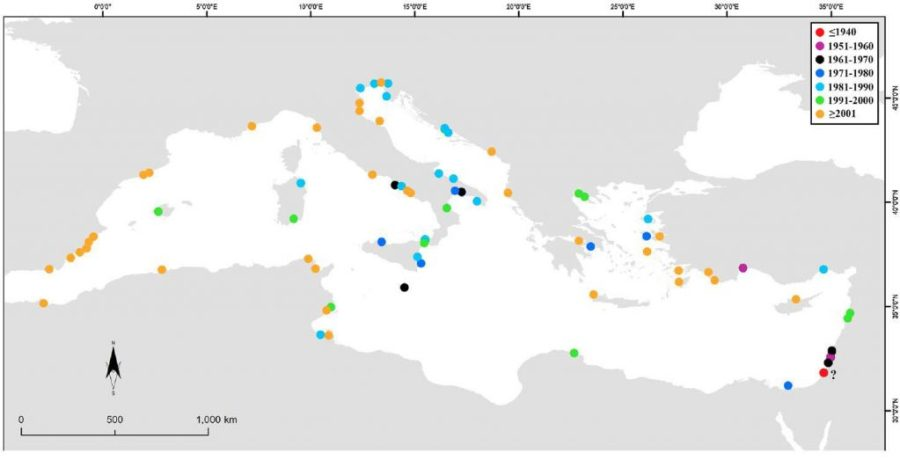 Records of Bursatella leachii in the Mediterranean by Bazzicalupo et al 2018)