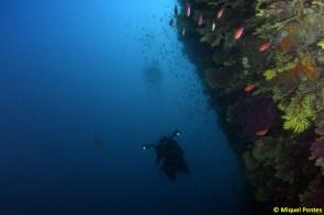 Miríadas de peces pequeños junto a la pared, por Miquel Pontes